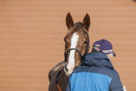 Inspection Day12 CDS Tattersalls