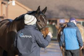 Inspection Day13 CDS Tattersalls