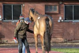Inspection Day18 CDS Tattersalls