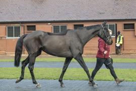 Inspection Day21 CDS Tattersalls