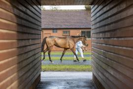 Inspection Day22 CDS Tattersalls