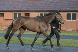 Inspection Day25 CDS Tattersalls