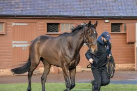 Inspection Day26 CDS Tattersalls